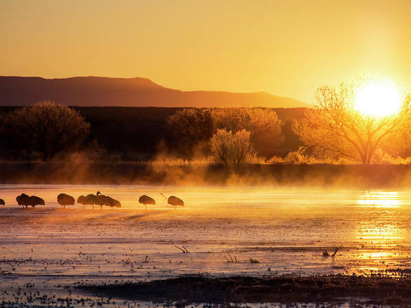 Wall Art - Photograph - Usa, New Mexico, Bosque Del Apache by Terry Eggers