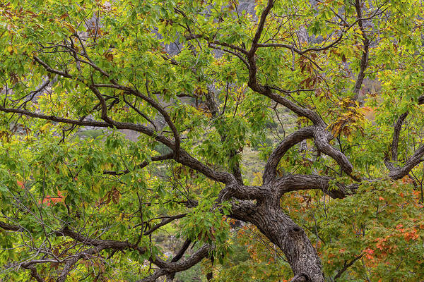Don Photograph - Usa, Texas, Guadalupe Mountains by Jaynes Gallery