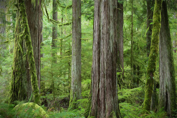 Wall Art - Photograph - Usa, Washington State, Olympic National by Jaynes Gallery