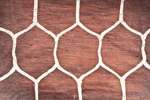 Tortoise Shell Photograph - Wood Background by Tom Gowanlock