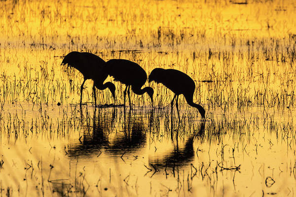 Wall Art - Photograph - Usa, New Mexico, Bosque Del Apache by Jaynes Gallery