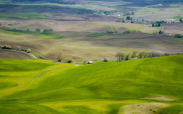 Photograph - 110517-112 The Palouse by Albert Seger