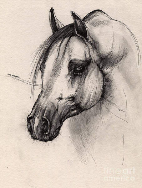 Arabian Drawing - Arabian Horse by Angel Ciesniarska