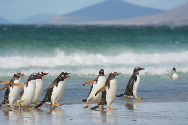 Falkland Islands Art Print by Inger Hogstrom