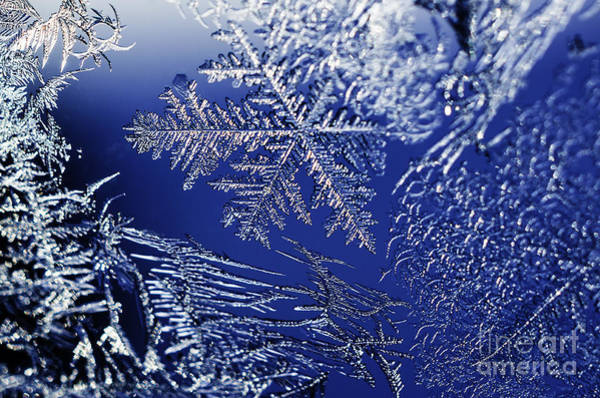 Photograph - Frost On A Windowpane by Thomas R Fletcher