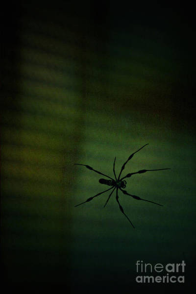 Wall Art - Photograph - 1..2  He's Coming For You by Trish Mistric