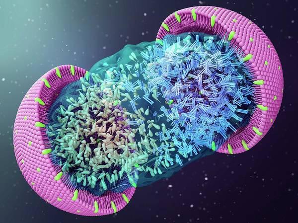 Cholesterol Photograph - Lipoprotein by Maurizio De Angelis