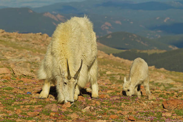 Goat Rocks Photograph - Usa, Colorado, Mount Evans by Jaynes Gallery