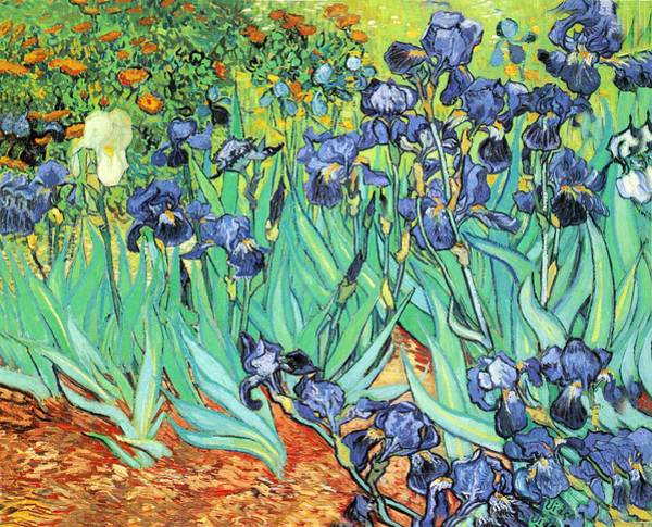 Photograph - Irises by Vincent Van Gogh