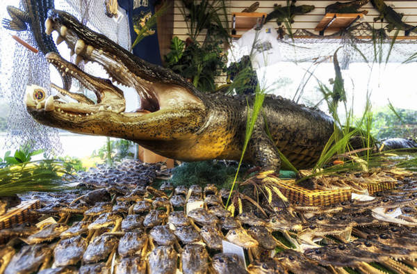 I-75 Photograph - 13 Foot Gator by Gary Warnimont
