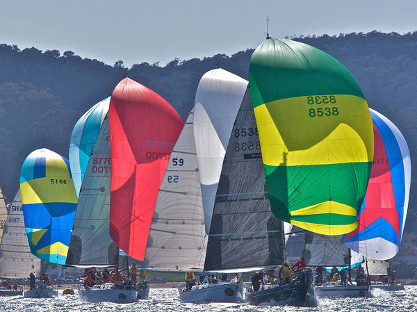Photograph - San Francisco Spinnakers by Steven Lapkin