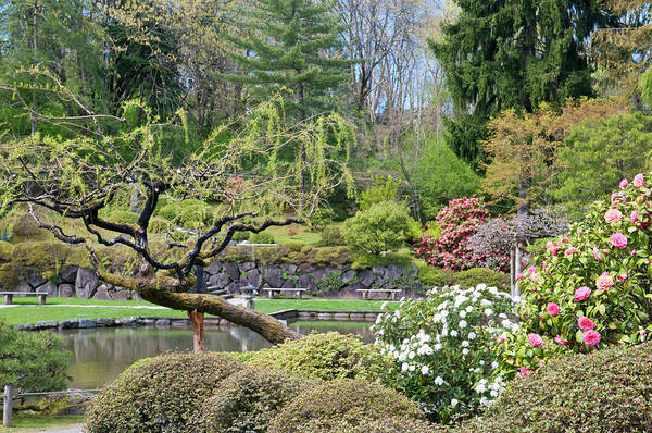 Arboretums Photograph - Usa, Wa, Seattle by Trish Drury