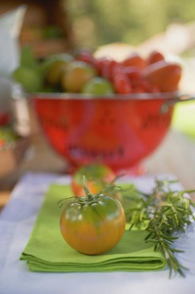 Wall Art - Photograph - Various Types Of Tomatoes On Table Out Of Doors by Foodcollection
