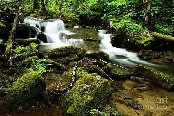 Photograph - West Virginia Waterfall  by Thomas R Fletcher
