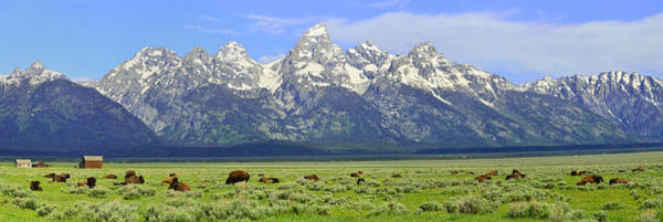 Photograph - Bison In The Tetons by Walt Sterneman