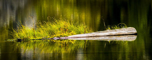 Photograph - 131005b-021 Forest Pond 1 by Albert Seger