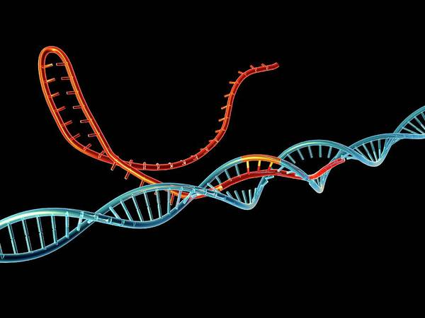 Wall Art - Photograph - Crispr-cas9 Gene Editing Complex by Alfred Pasieka/science Photo Library