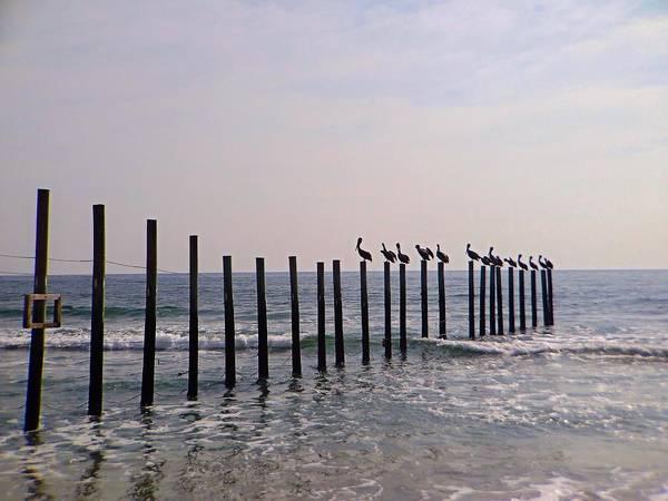 Photograph - 14 Pelicans by Chris Montcalmo
