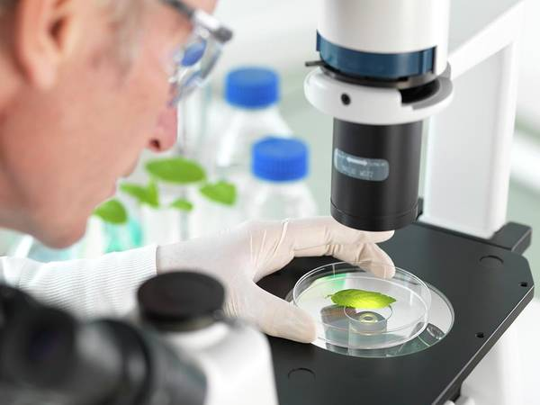 Scientist Photograph - Plant Biotechnology by Tek Image