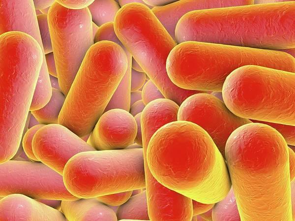 Escherichia Coli Photograph - Rod-shaped Bacteria by Kateryna Kon