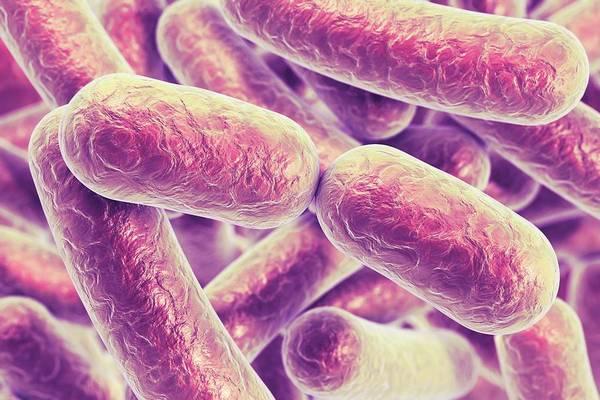 Wall Art - Photograph - Rod-shaped Bacteria by Kateryna Kon/science Photo Library