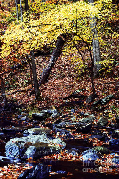 Photograph - South Branch Quantico Creek by Thomas R Fletcher