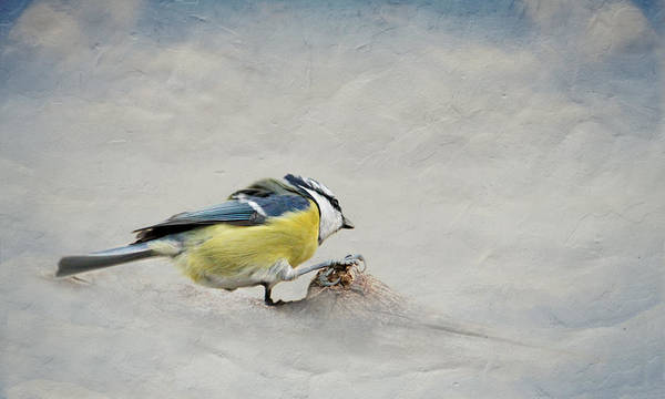 Processing Mixed Media - Tit by Heike Hultsch