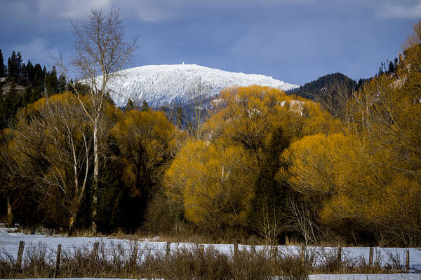 Photograph - 140222a-70 Winter Willows by Albert Seger