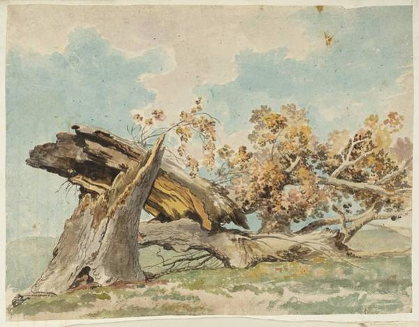 Assistance Painting - A Fallen Tree Null Carlo Labruzzi by MotionAge Designs