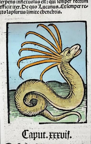 Woodcut Photograph - 1491 Cerastes Lure Snake Hortus Sanitatis by Paul D Stewart