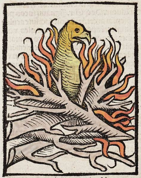 Encyclopedia Wall Art - Photograph - 1491 Phoenix In Flames Hortus Sanitatis by Paul D Stewart