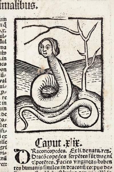 Woodcut Photograph - 1491 Snake Woman Eve Hortus Sanitatis by Paul D Stewart