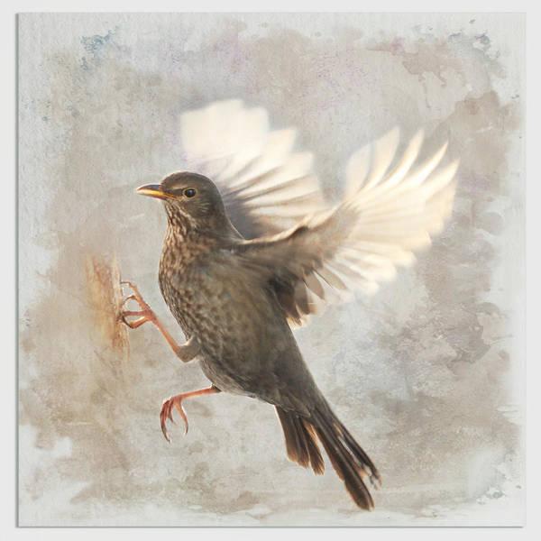 Wallpaper Mixed Media - Bird  by Heike Hultsch