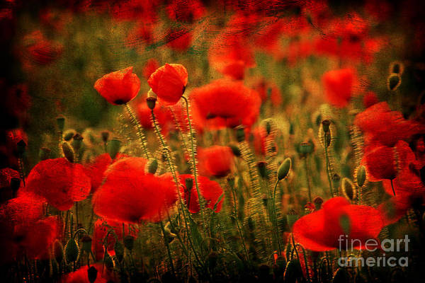 Corn Field Photograph - Field Of Poppies  by Bernard Jaubert