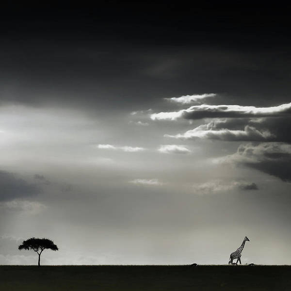 Alone Photograph - 15 Minutes Of Happiness by Piet Flour