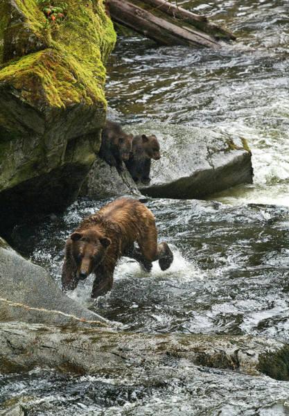 Bear Creek Photograph - Usa, Alaska, Inside Passage by Jaynes Gallery