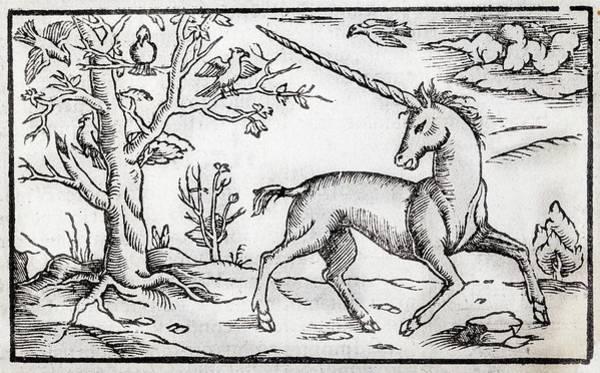 Beasts Photograph - 1560 Munster Unicorn Engraving by Paul D Stewart