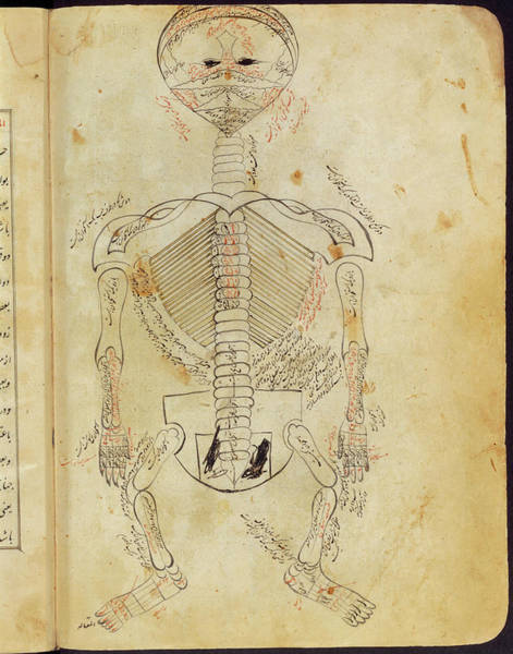 Skeletal System Photograph - 15th Century Drawing Of The Skeletal System. by National Library Of Medicine/science Photo Library