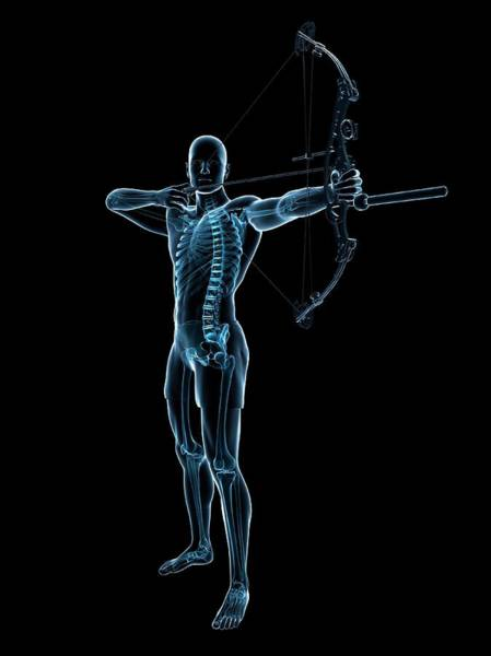 Archery Photograph - Archer by Sciepro/science Photo Library
