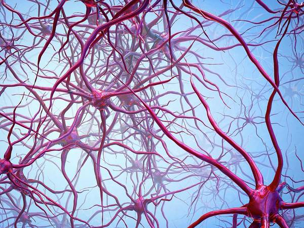Neuron Wall Art - Photograph - Neural Network by Maurizio De Angelis