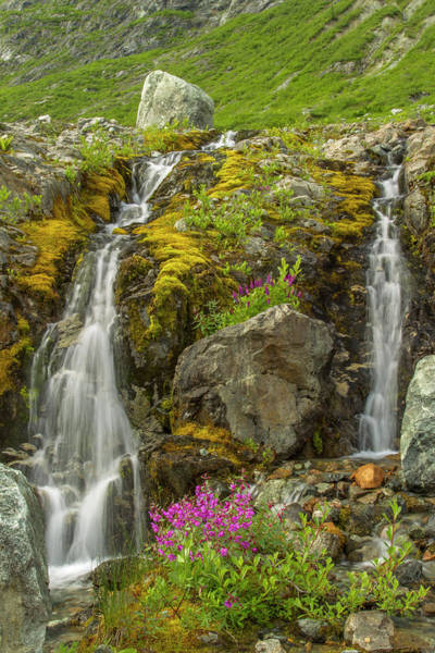Fireweed Photograph - Usa, Alaska, Glacier Bay National Park by Jaynes Gallery