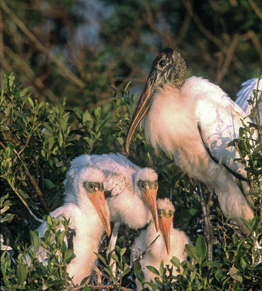 Usa, Florida, Everglades National Park Art Print