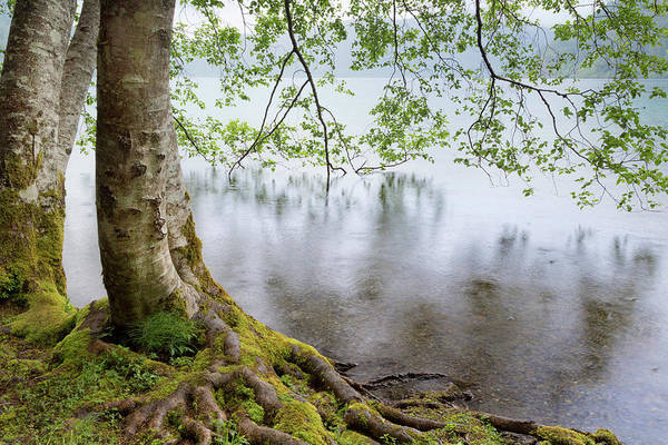 Alder Photograph - Usa, Washington, Olympic National Park by Jaynes Gallery