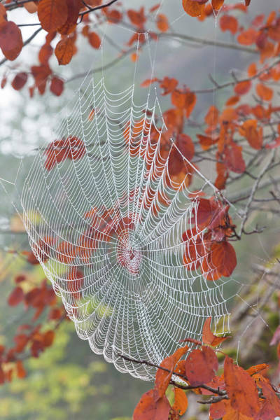 Spiderweb Photograph - Usa, Washington, Seabeck by Jaynes Gallery