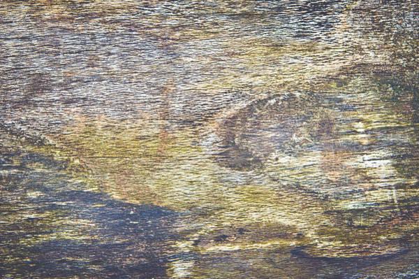 Orange Lichen Photograph - Wood Background by Tom Gowanlock