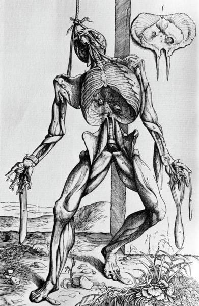 De Humani Corporis Fabrica Photograph - 16th Century Illustration Of A Suspended Corpse. by Science Photo Library