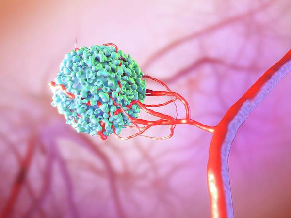 Wall Art - Photograph - Blood Vessel Formation by Maurizio De Angelis/science Photo Library