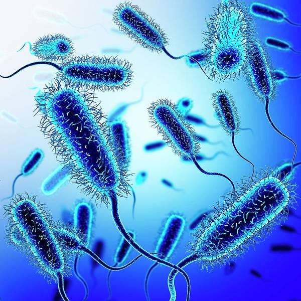 Wall Art - Photograph - E. Coli Bacteria by Pixologicstudio/science Photo Library