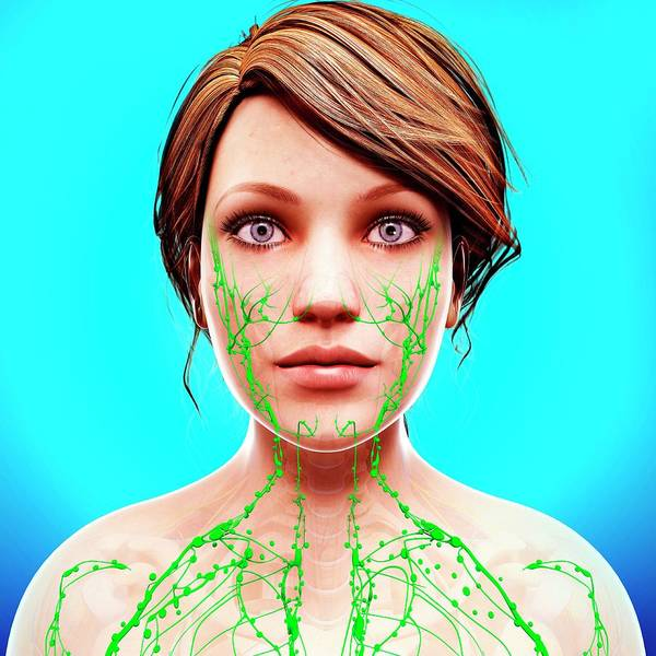 Head And Shoulders Photograph - Female Lymphatic System by Pixologicstudio/science Photo Library
