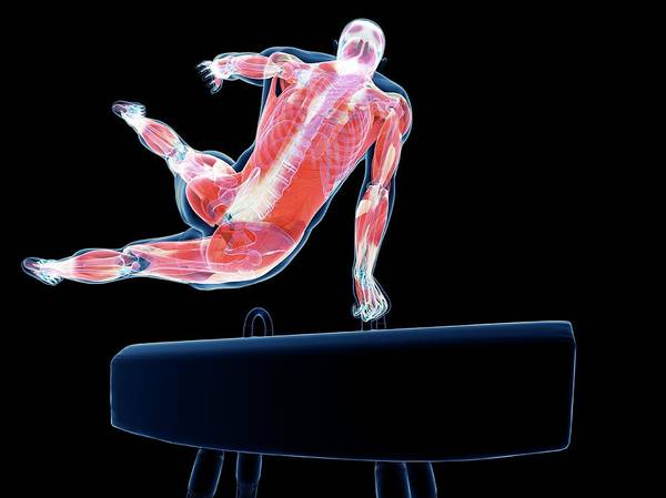 Wall Art - Photograph - Gymnast by Sciepro/science Photo Library